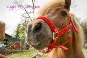 Pferd in Luggis Erlebnisstall